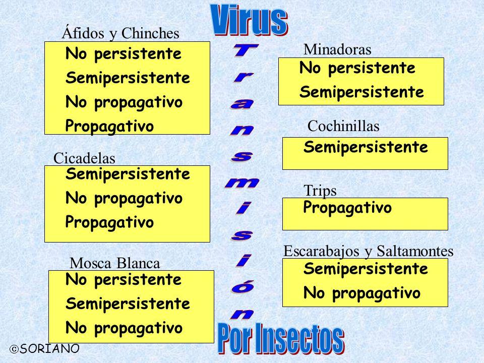 Virus Transmisión Por Insectos Áfidos y Chinches Minadoras