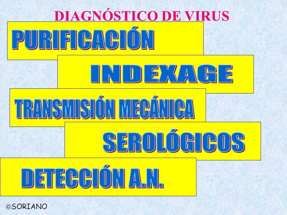 DIAGNÓSTICO DE VIRUS PURIFICACIÓN INDEXAGE TRANSMISIÓN MECÁNICA