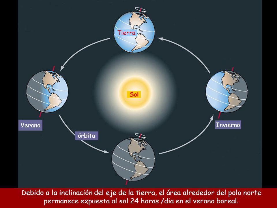 permanece expuesta al sol 24 horas /dia en el verano boreal.