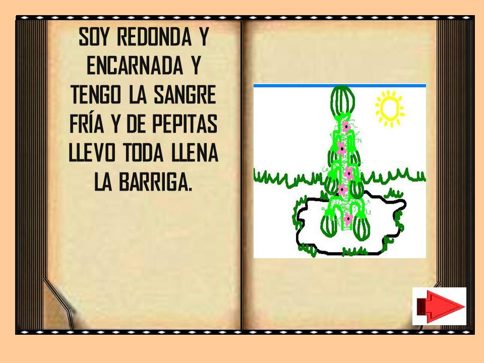SOY REDONDA Y ENCARNADA Y TENGO LA SANGRE FRÍA Y DE PEPITAS LLEVO TODA LLENA LA BARRIGA.
