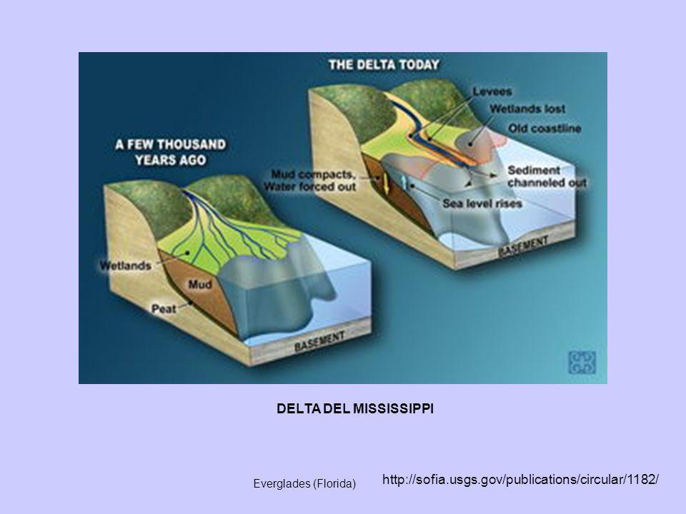 DELTA DEL MISSISSIPPI http://sofia.usgs.gov/publications/circular/1182/ Everglades (Florida)