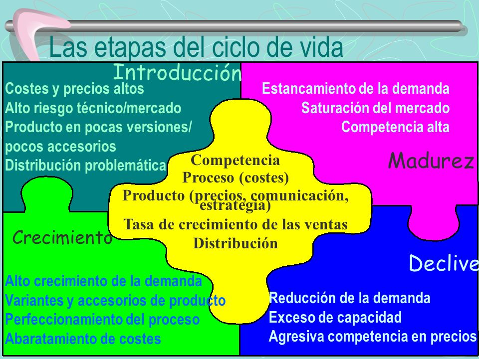 Las etapas del ciclo de vida