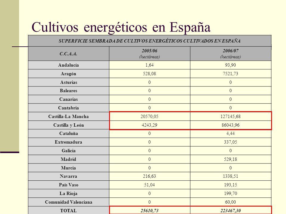 Cultivos energéticos en España