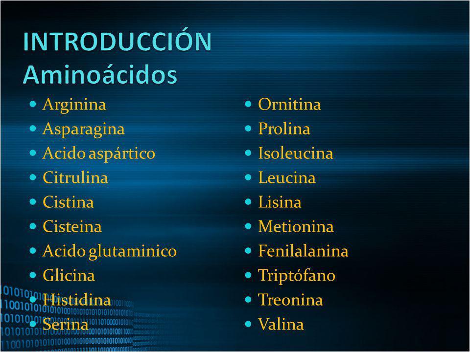 INTRODUCCIÓN Aminoácidos Arginina Asparagina Acido aspártico Citrulina