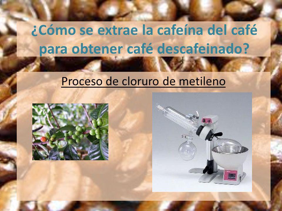 ¿Cómo se extrae la cafeína del café para obtener café descafeinado