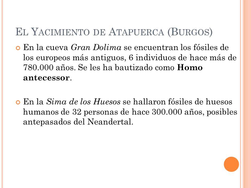 El Yacimiento de Atapuerca (Burgos)