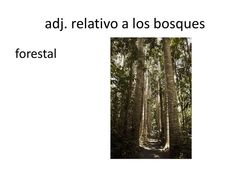 adj. relativo a los bosques