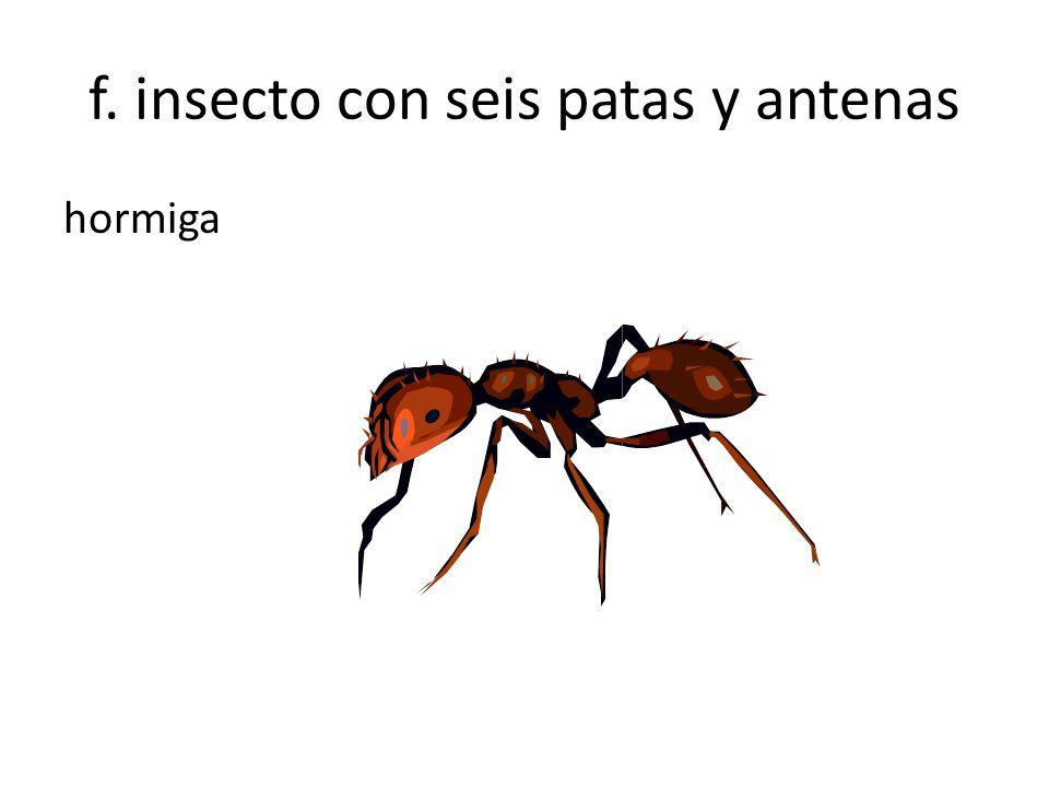 f. insecto con seis patas y antenas