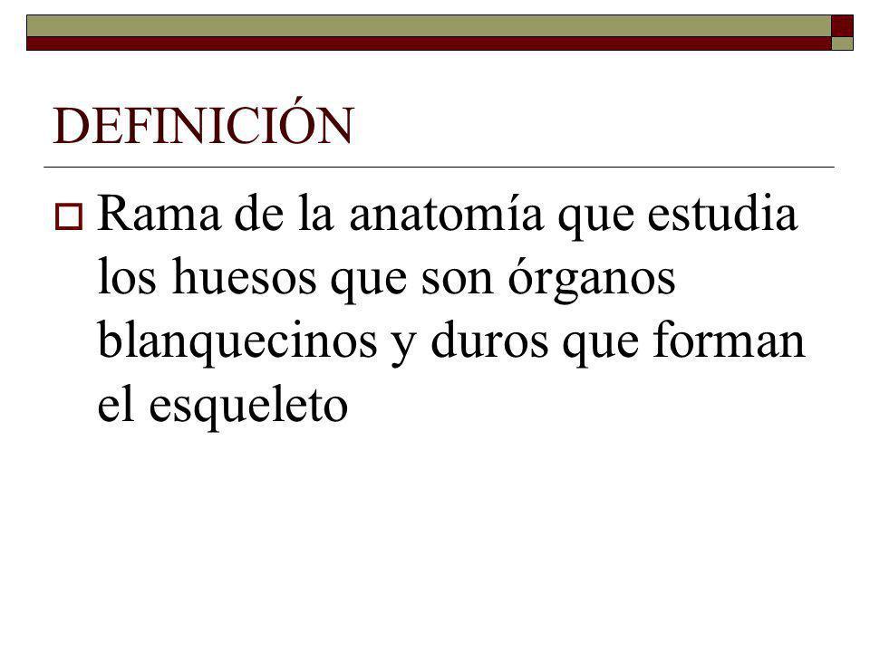 DEFINICIÓN Rama de la anatomía que estudia los huesos que son órganos blanquecinos y duros que forman el esqueleto.