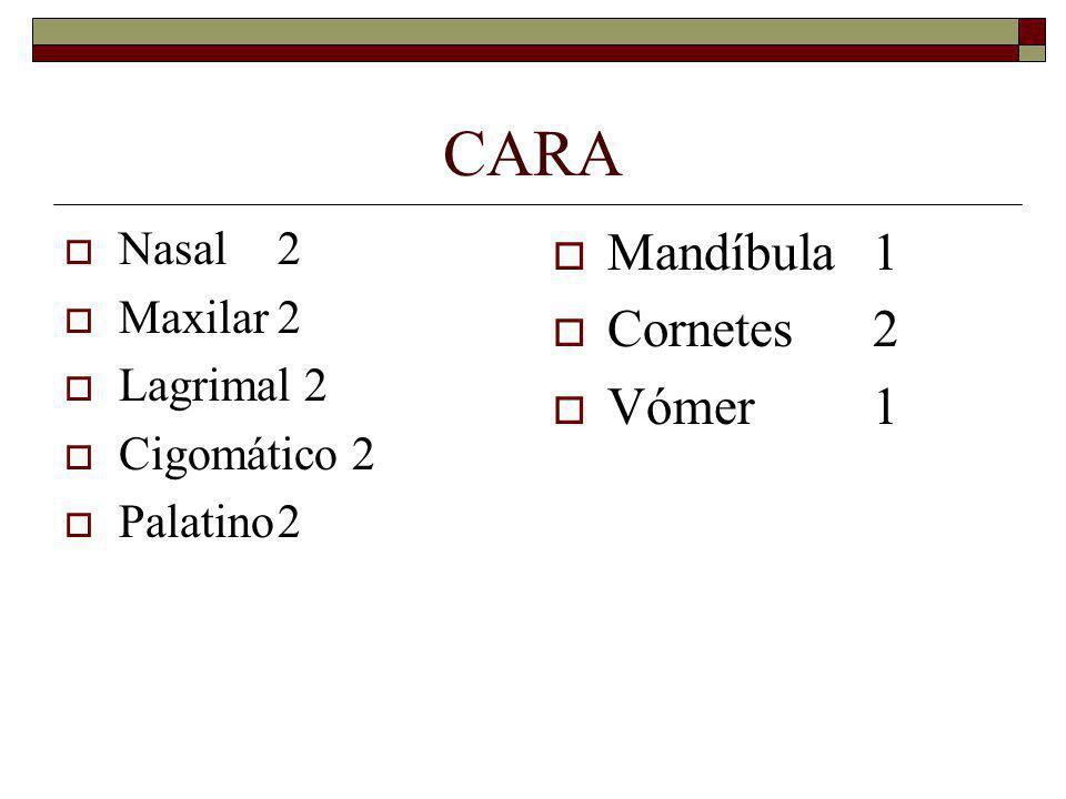 CARA Mandíbula 1 Cornetes 2 Vómer 1 Nasal 2 Maxilar 2 Lagrimal 2