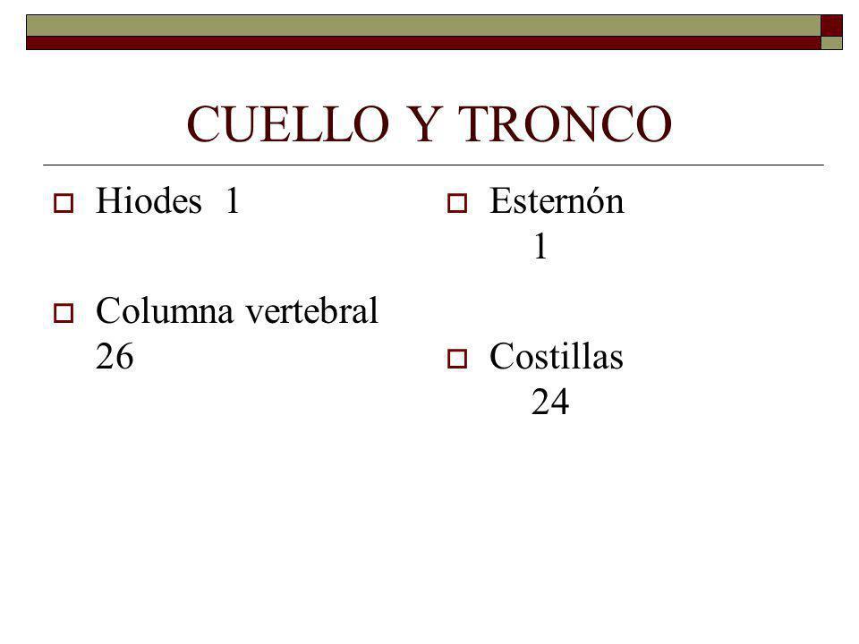 CUELLO Y TRONCO Hiodes 1 Columna vertebral 26 Esternón 1 Costillas 24