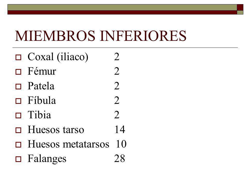 MIEMBROS INFERIORES Coxal (iliaco) 2 Fémur 2 Patela 2 Fíbula 2 Tibia 2