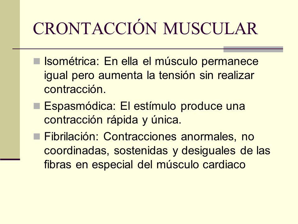 CRONTACCIÓN MUSCULAR Isométrica: En ella el músculo permanece igual pero aumenta la tensión sin realizar contracción.