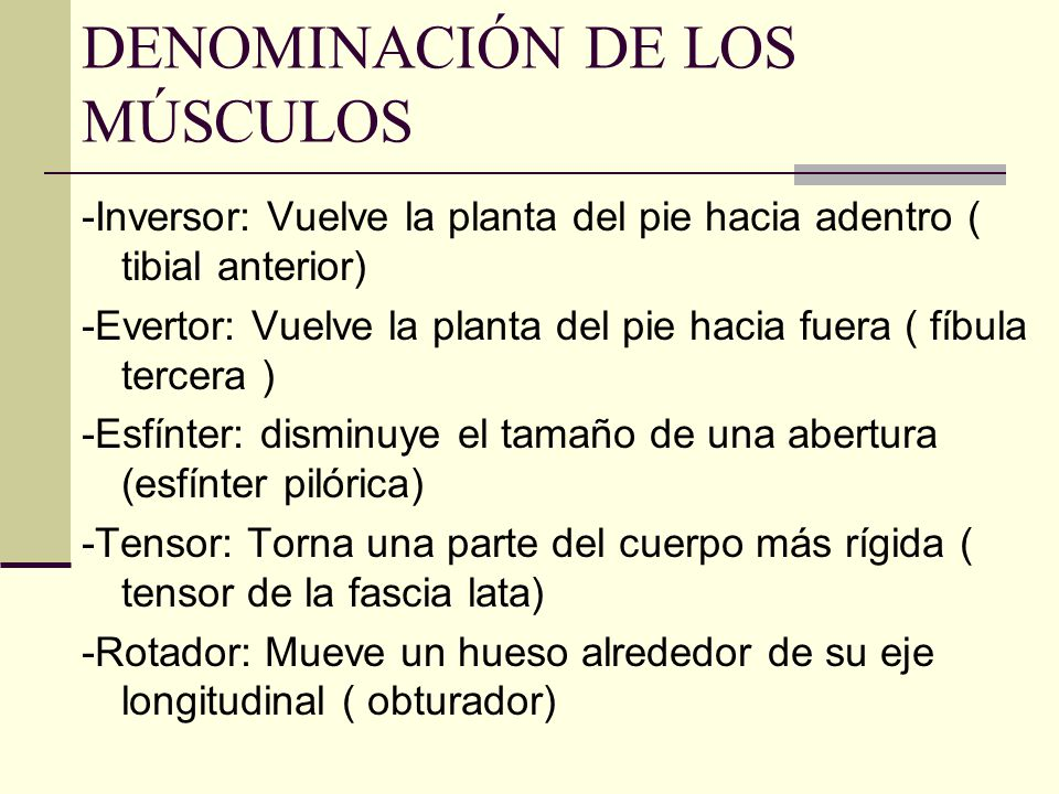 DENOMINACIÓN DE LOS MÚSCULOS