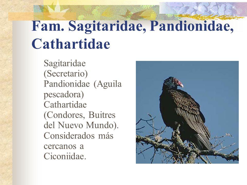 Fam. Sagitaridae, Pandionidae, Cathartidae