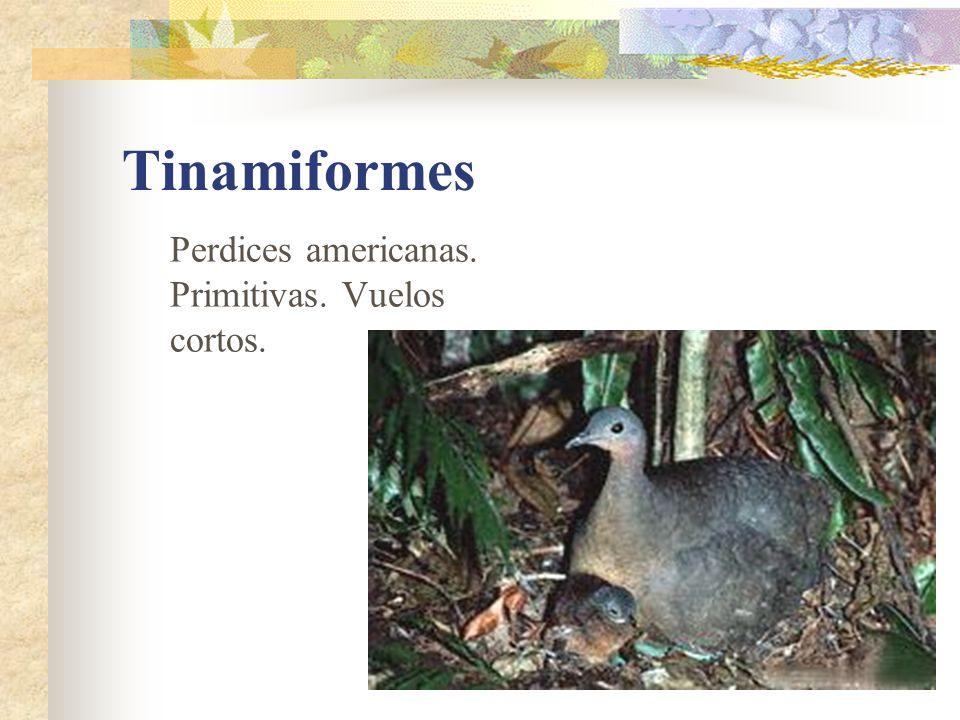 Tinamiformes Perdices americanas. Primitivas. Vuelos cortos.