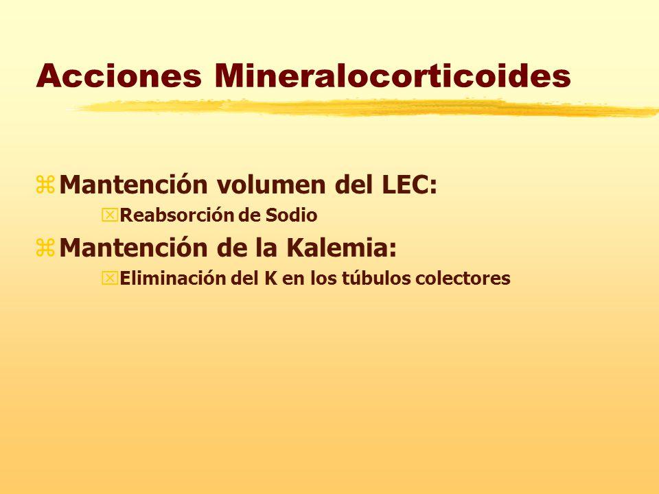 Acciones Mineralocorticoides