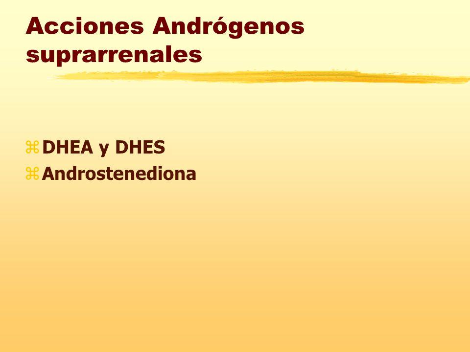 Acciones Andrógenos suprarrenales