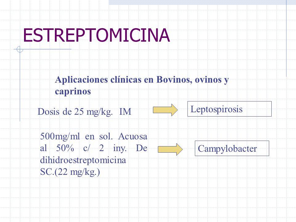 ESTREPTOMICINA Aplicaciones clínicas en Bovinos, ovinos y caprinos