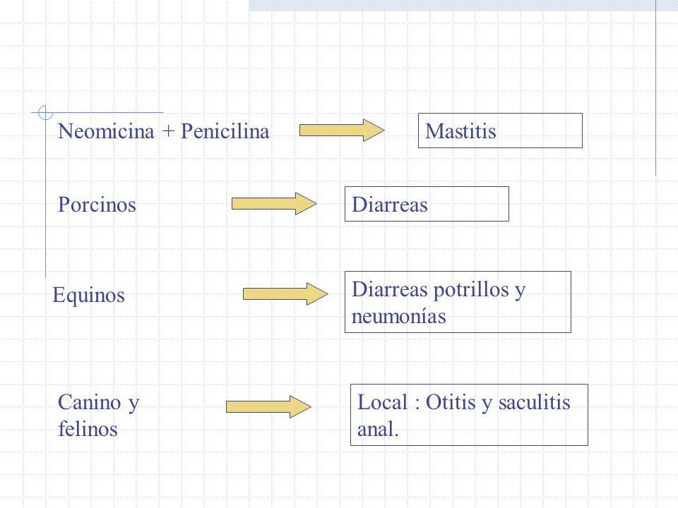 Neomicina + Penicilina