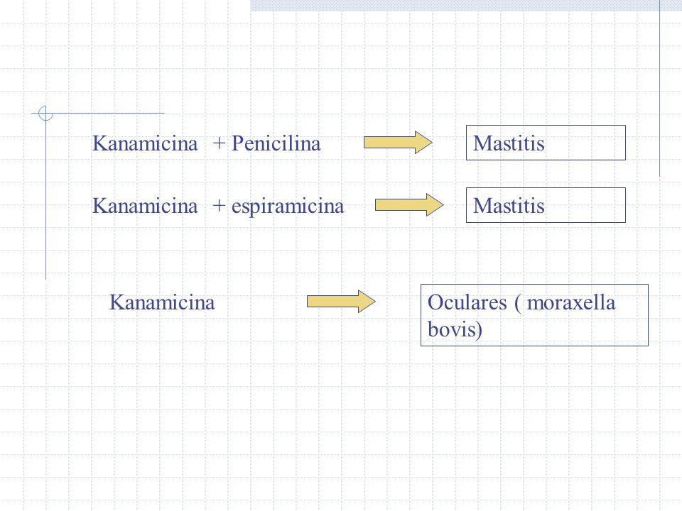 Kanamicina + Penicilina