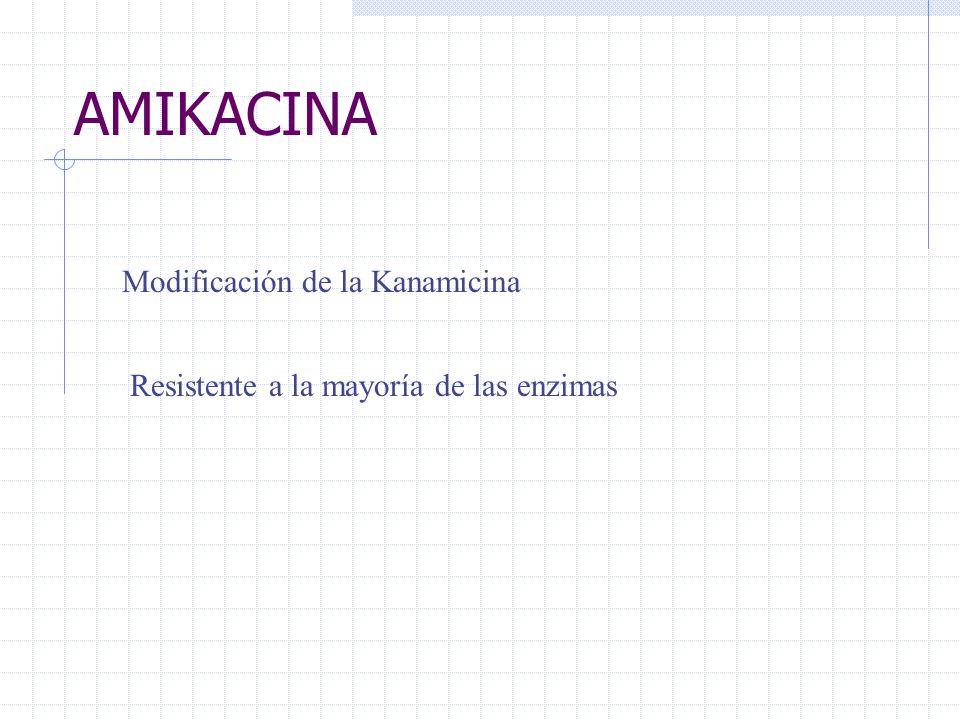 AMIKACINA Modificación de la Kanamicina