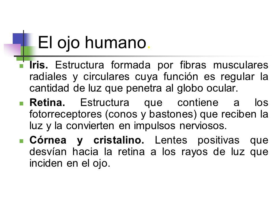 El ojo humano.