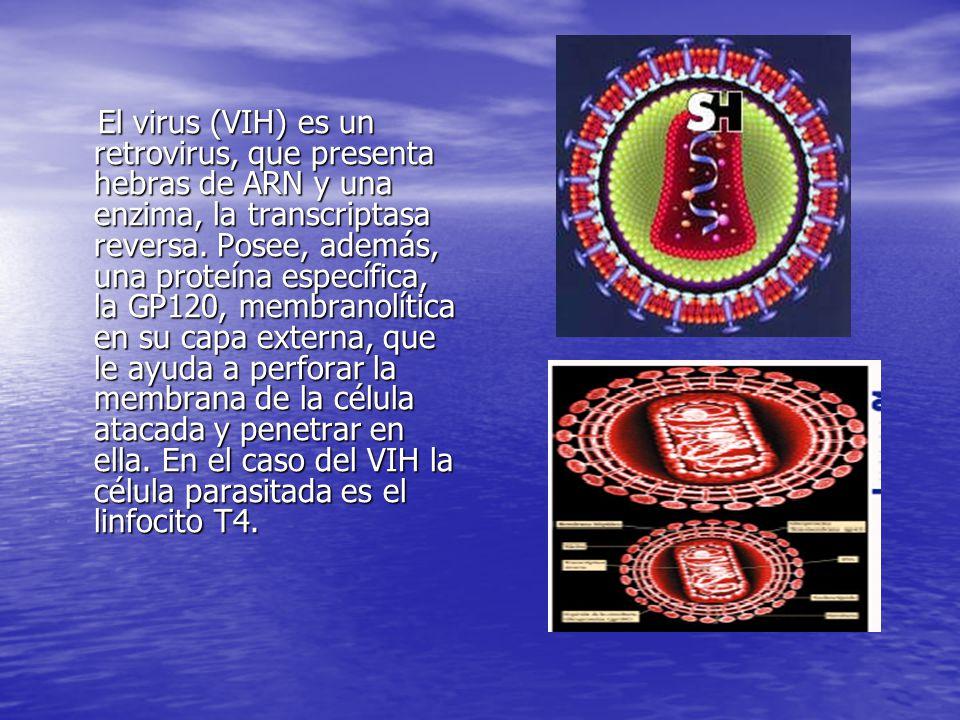 El virus (VIH) es un retrovirus, que presenta hebras de ARN y una enzima, la transcriptasa reversa.