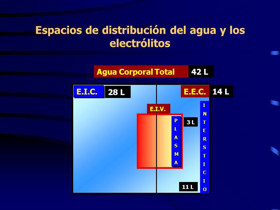 Espacios de distribución del agua y los electrólitos