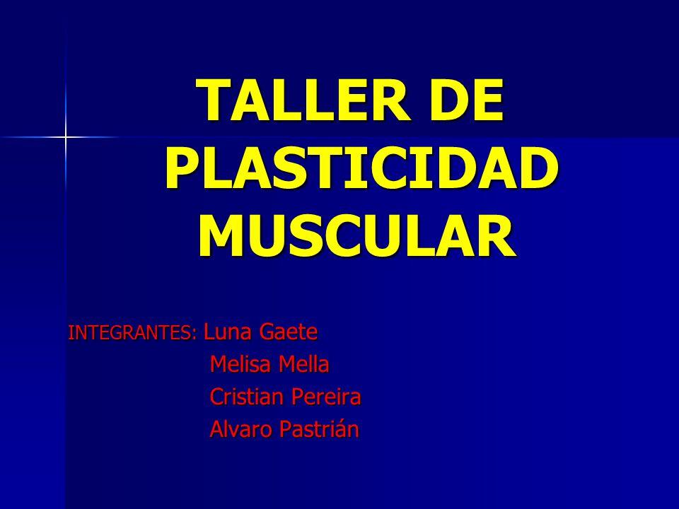 TALLER DE PLASTICIDAD MUSCULAR