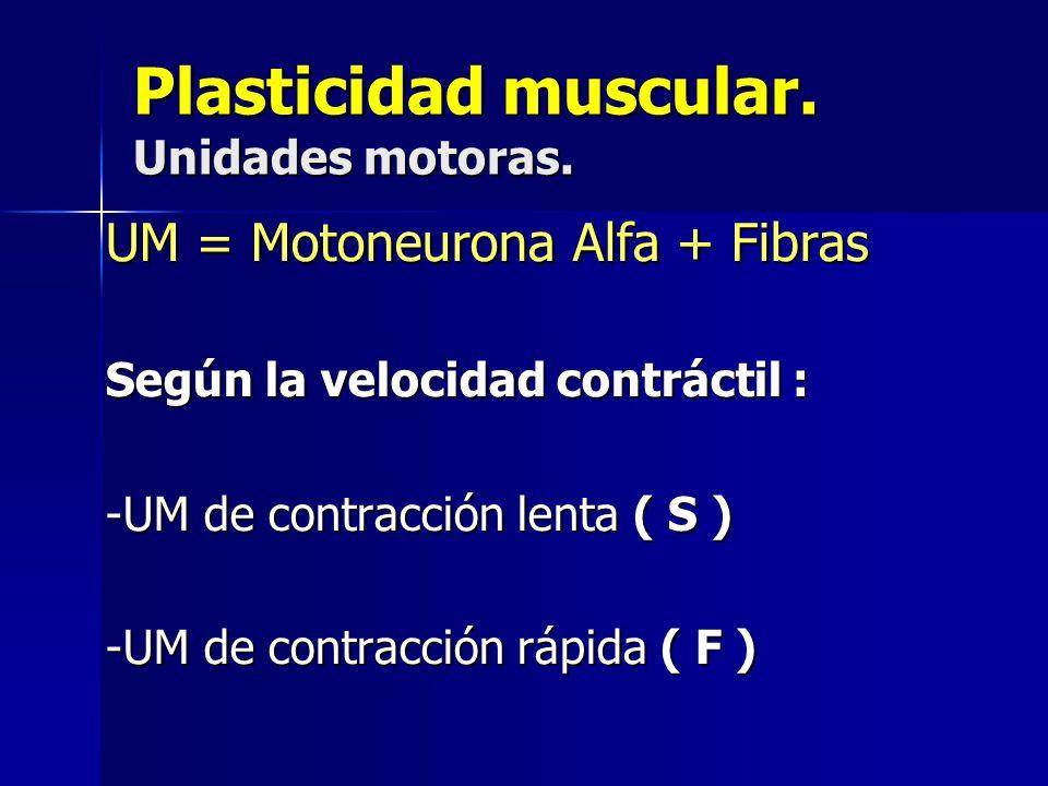 Plasticidad muscular. Unidades motoras.