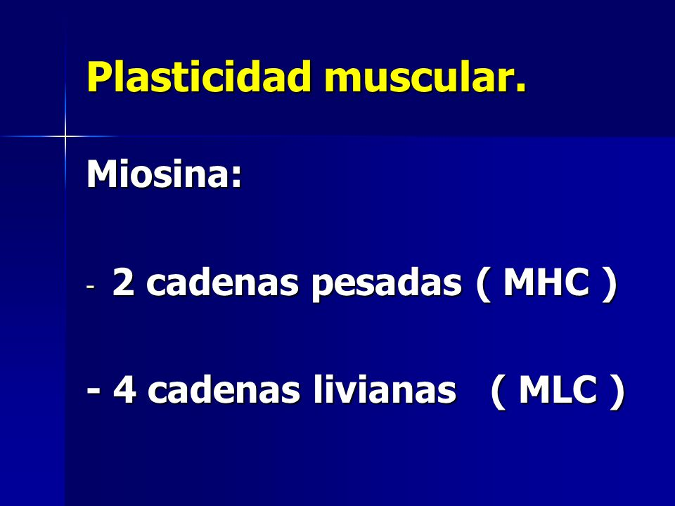 Plasticidad muscular. Miosina: 2 cadenas pesadas ( MHC )