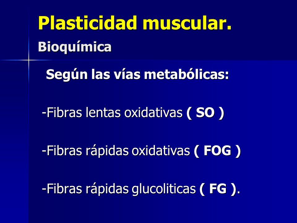 Plasticidad muscular. Bioquímica