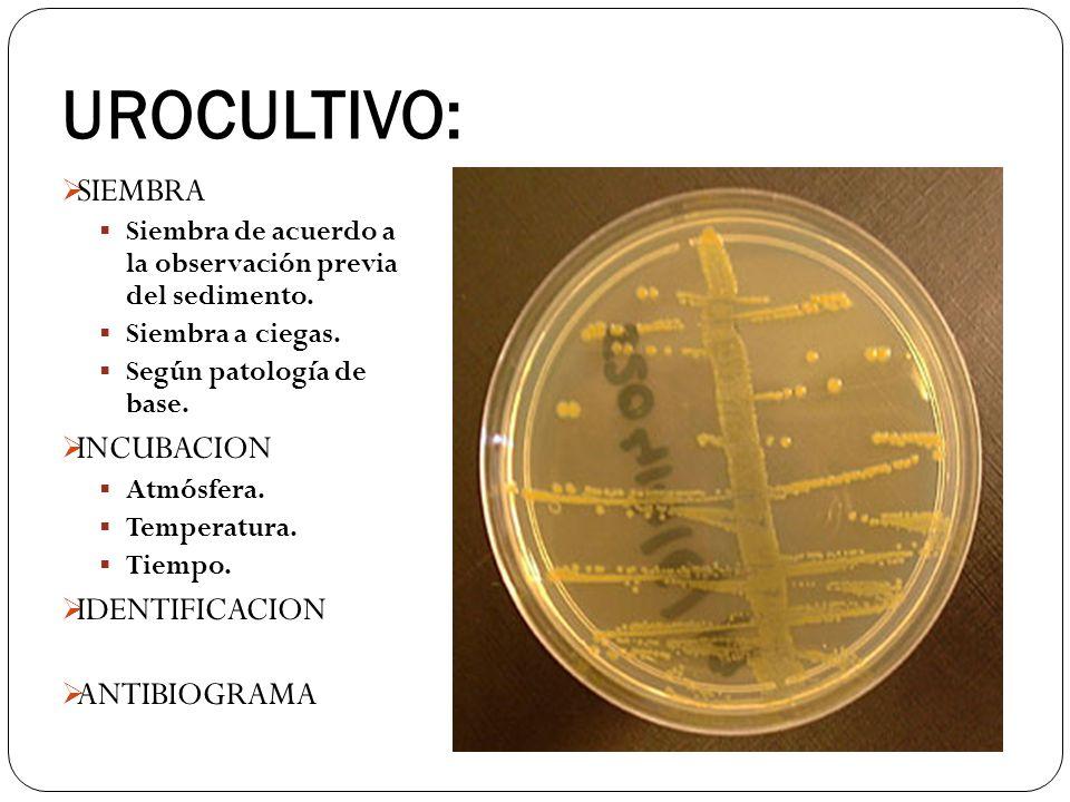 UROCULTIVO: SIEMBRA INCUBACION IDENTIFICACION ANTIBIOGRAMA