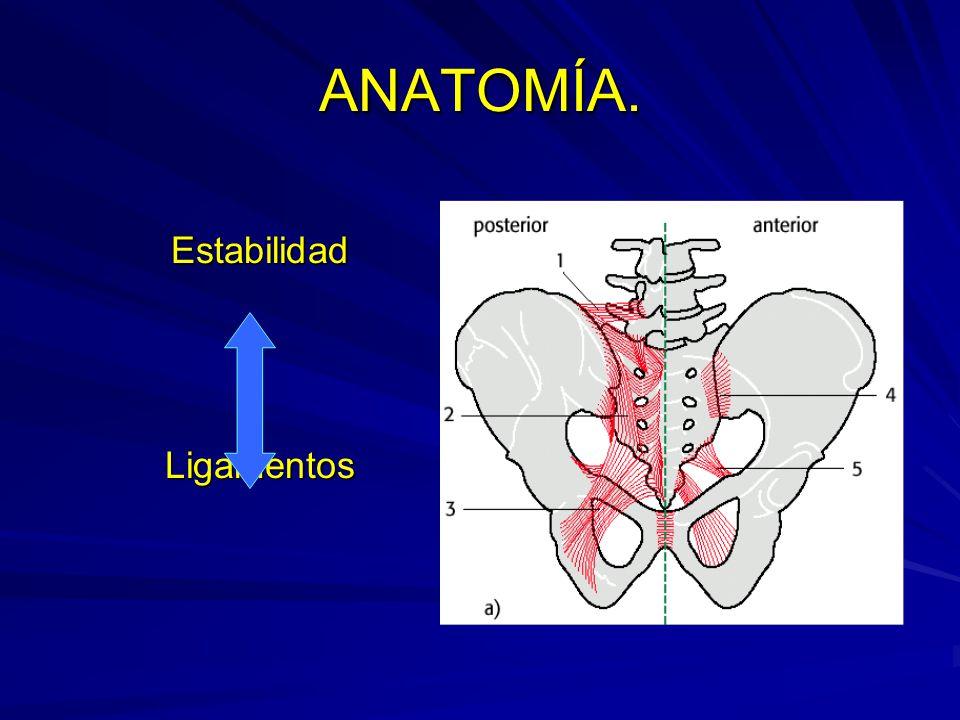 ANATOMÍA. Estabilidad Ligamentos