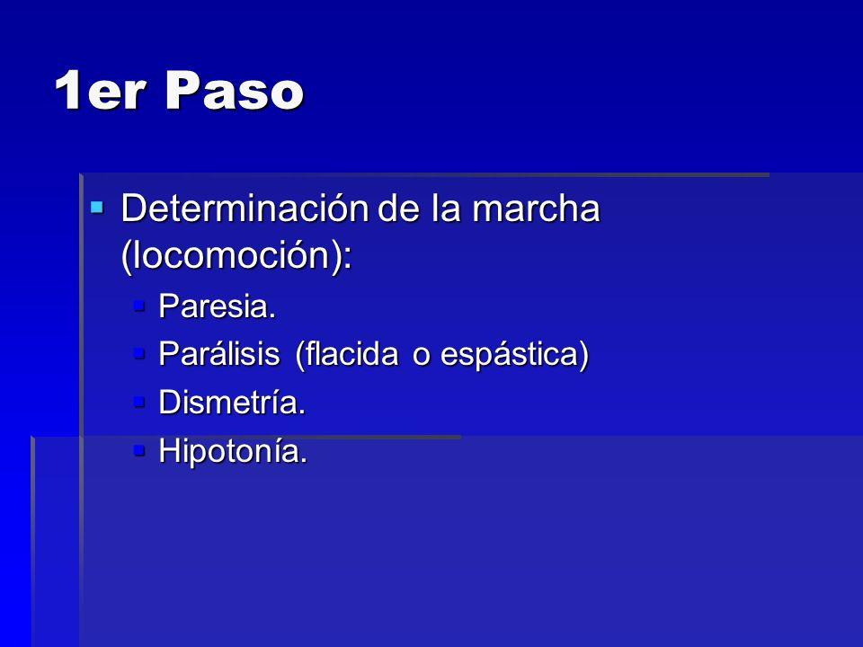 1er Paso Determinación de la marcha (locomoción): Paresia.