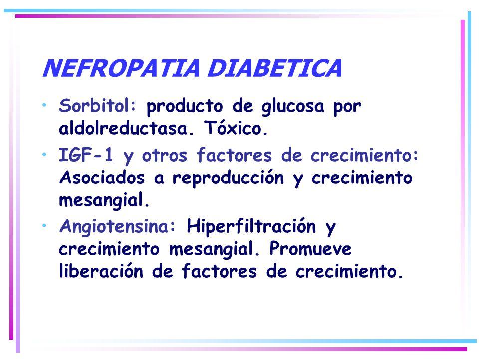 NEFROPATIA DIABETICA Sorbitol: producto de glucosa por aldolreductasa. Tóxico.