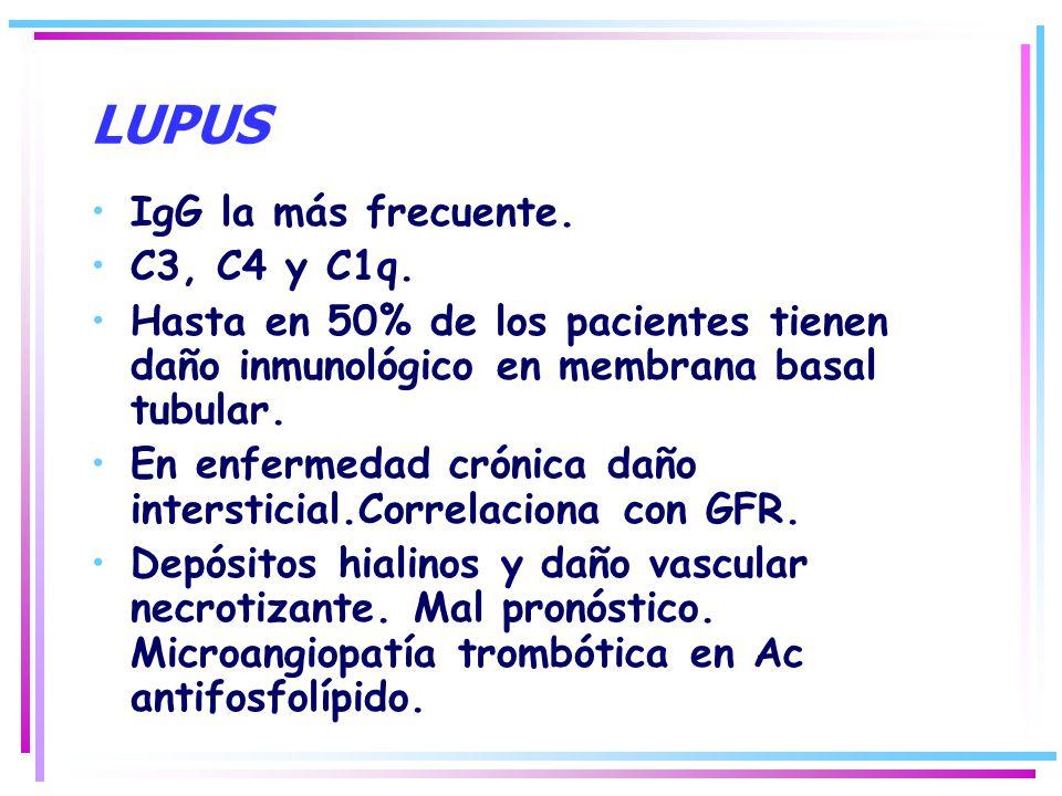 LUPUS IgG la más frecuente. C3, C4 y C1q.