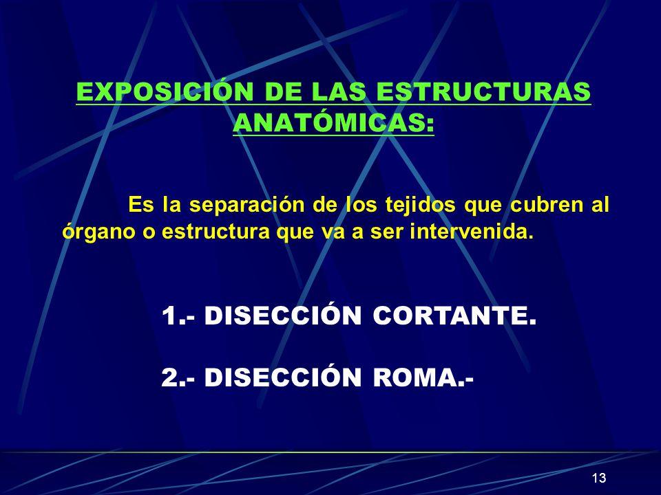 EXPOSICIÓN DE LAS ESTRUCTURAS ANATÓMICAS: