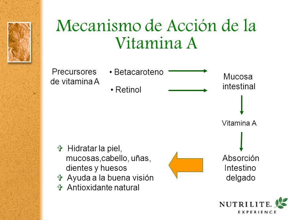 Mecanismo de Acción de la Vitamina A