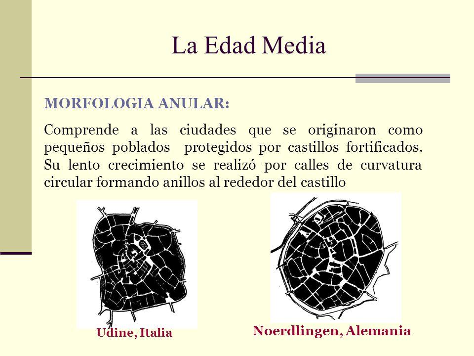 La Edad Media MORFOLOGIA ANULAR: