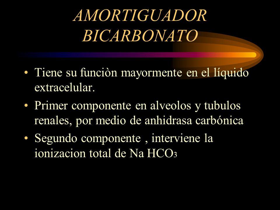 AMORTIGUADOR BICARBONATO