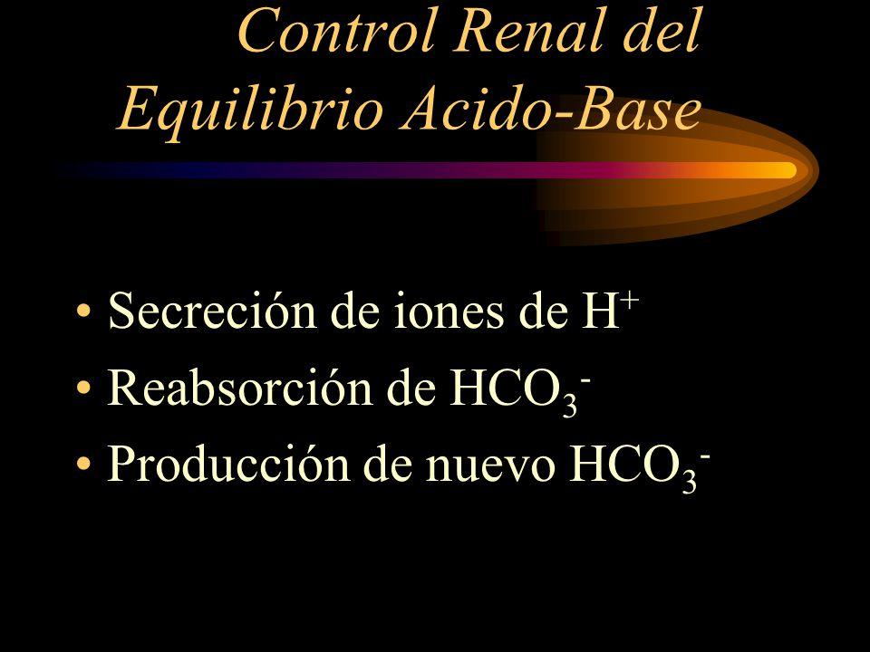Control Renal del Equilibrio Acido-Base