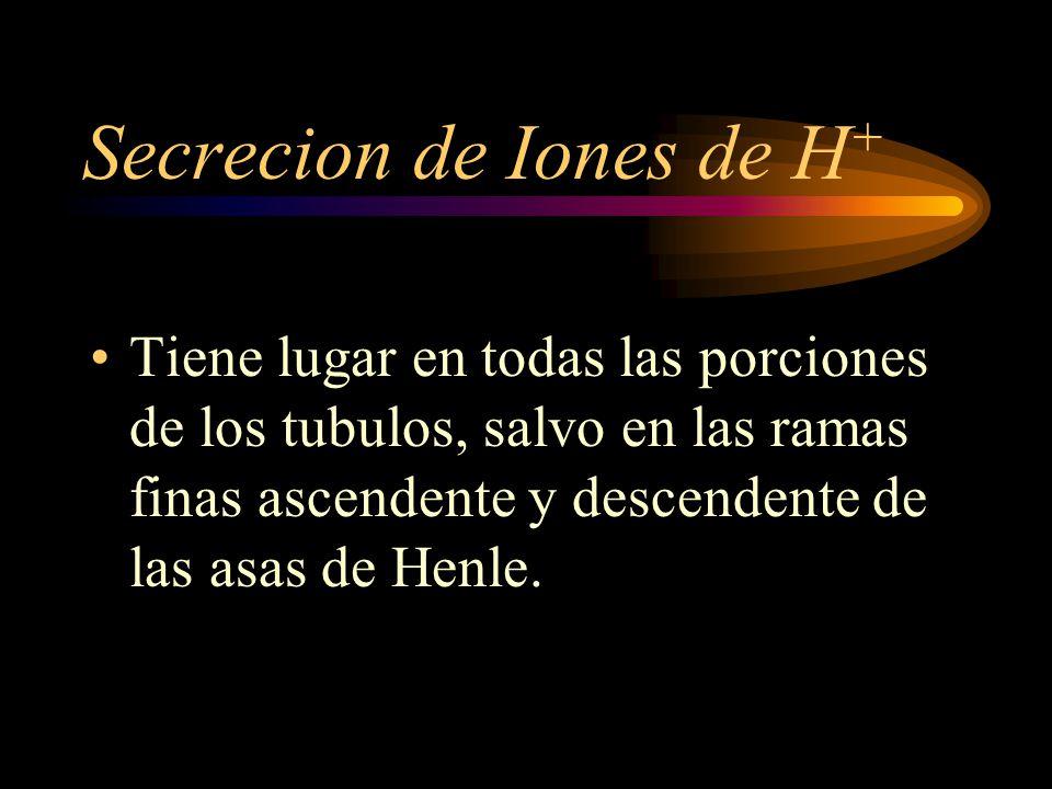 Secrecion de Iones de H+
