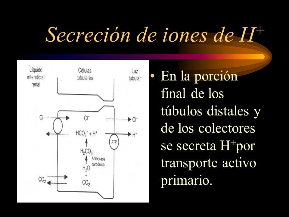 Secreción de iones de H+