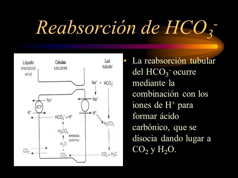 Reabsorción de HCO3-