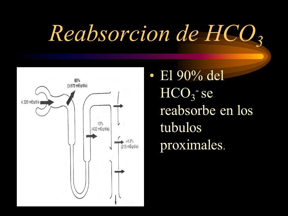 Reabsorcion de HCO3 El 90% del HCO3- se reabsorbe en los tubulos proximales.