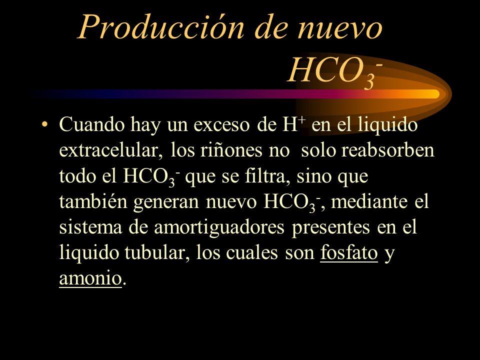 Producción de nuevo HCO3-