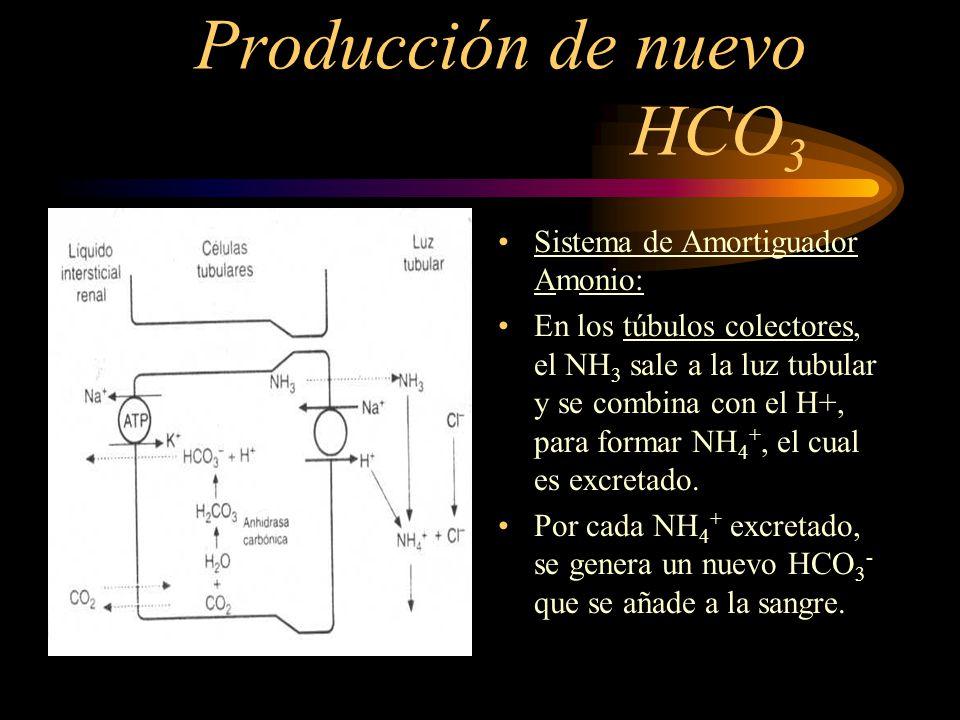 Producción de nuevo HCO3