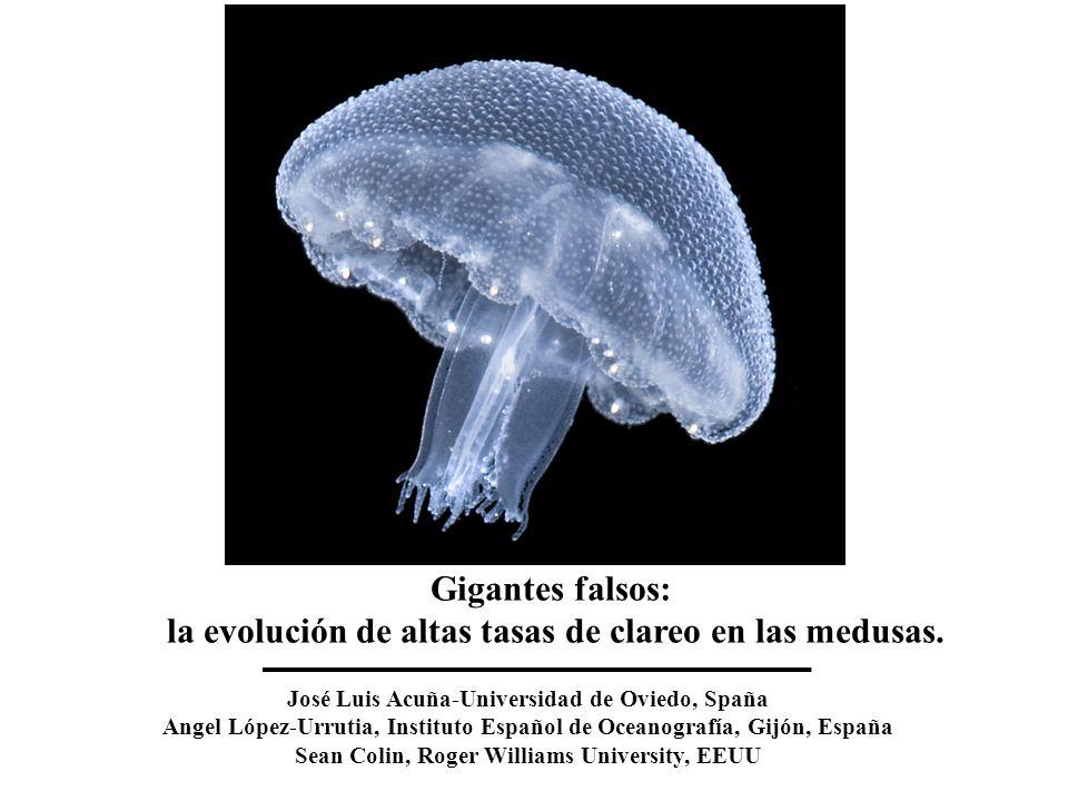Gigantes falsos: la evolución de altas tasas de clareo en las medusas.